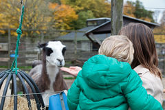 Family in Zoo. Mother and son in Zoo feeding lama stock photography