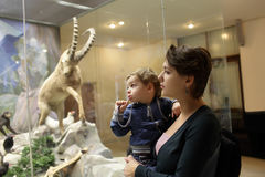 Family at zoological museum Stock Image