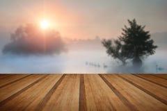 Familyof天鹅横跨有薄雾的有雾的秋天Fall湖游泳在sunri 库存照片