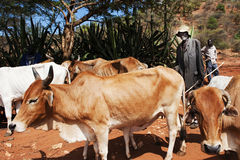Famine. Chemer Lokot is moving his livestock to other parts of the Pokot region in Kenya. The famine is making its toll on both people and livestock