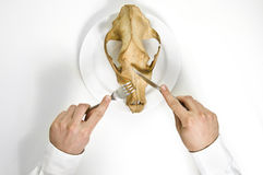 Famine concept. Skull meal. Famine concept. Man eat animal skull with fork and knife Stock Photography