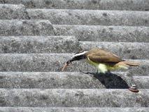 Famished птица Стоковые Изображения