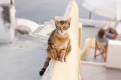 Famished cat. Image of a young famished cat on a wall in Santorini Stock Photography