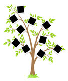 Famity tree Royalty Free Stock Images