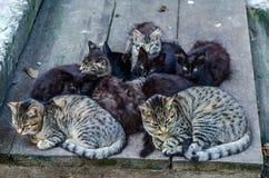 Família de gatos dispersa Fotografia de Stock