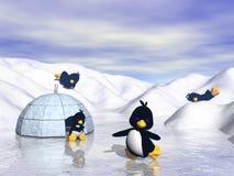 Família do pinguim Foto de Stock