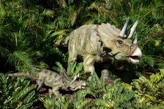 Família do Triceratops que esconde na selva da samambaia no jardim zoológico de Perth Imagens de Stock Royalty Free