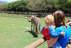 Família que olha a zebra Fotos de Stock Royalty Free