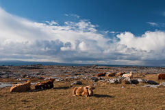 Famosos protegidos burren a paisagem do parque Fotografia de Stock Royalty Free