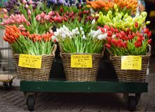 The famous Amsterdam flower market Bloemenmarkt. Multicolor tulips. royalty free stock images