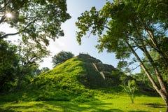 Tikal. Famous ancient Mayan temples in Tikal National Park, Guatemala, Central America Royalty Free Stock Photos