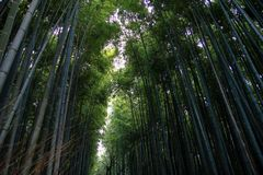 Famous Arashiyama Bamboo Grove, Japan royalty free stock image