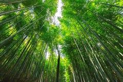 Japanese bamboo forest. The famous Arashiyama Japanese bamboo forest, Kyoto, Japan royalty free stock image