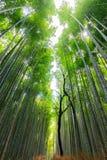 Japanese bamboo forest. The famous Arashiyama Japanese bamboo forest, Kyoto, Japan stock photo