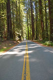 Famous avenue of the giants Royalty Free Stock Image