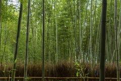 Famous bamboo forest at Arashiyama , Kyoto. Famous bamboo forest at Arashiyama , Kyoto Royalty Free Stock Photos