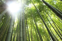 Bamboo forest in Kyoto, Japan royalty free stock photos