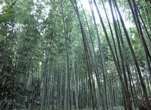 Bamboo grove at Arashiyama, Kyoto - Japan Stock Photography