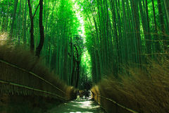 Famous bamboo grove at Arashiyama Stock Photo