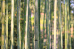 Famous bamboo grove at Arashiyama, Kyoto - Japan. The Famous bamboo grove at Arashiyama, Kyoto - Japan Stock Photo
