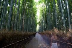 Famous bamboo grove at Arashiyama, Kyoto Stock Photography