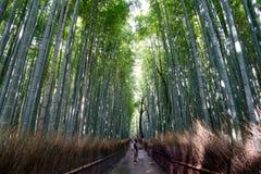 Famous bamboo grove at Arashiyama, Kyoto Royalty Free Stock Image