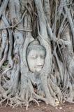 The famous buddha head, Ayutthaya, Thailand royalty free stock photos