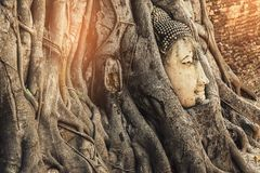 Famous Buddha Head with Banyan Tree Root at Buddhist temple Wat stock images