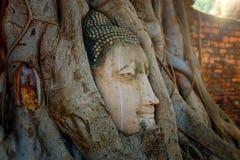 Famous Buddha Head with Banyan Tree Root at Wat Mahathat Temple in Ayuthaya Historical Park Royalty Free Stock Image