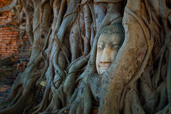 Famous Buddha Head with Banyan Tree Root at Wat Mahathat Temple in Ayuthaya Historical Park Royalty Free Stock Photo