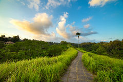 The famous Campuhan Ridge Walk in Ubud, Bali Royalty Free Stock Photo