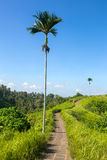 The famous Campuhan Ridge Walk in Ubud, Bali Royalty Free Stock Images