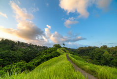 The famous Campuhan Ridge Walk in Ubud, Bali Royalty Free Stock Photos