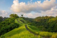 The famous Campuhan Ridge Walk in Ubud, Bali Stock Photo