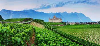 Famous castle Chateau d`Aigle in canton Vaud, Switzerland. Castle in Aigle is overlooking surrounding vineyards and the Alps. stock photography