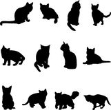 Famous cats. Cat is a cute animal, it is human friends and pet Royalty Free Stock Images