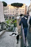 The famous cats of Rome. ROME, ITALY - DECEMBER 27 2018: People meet the famous cats of Rome at Area Sacra in Largo di Torre Argentina stock photography