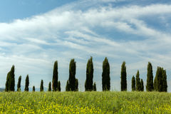 Tuscan circle of cypresses Royalty Free Stock Photos