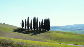 Famous cypress island stock footage
