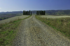 Famous cypress trees in Tuscany Stock Photo