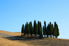 Famous cypresses in Orcia Valley Royalty Free Stock Image