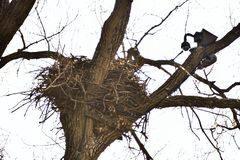 Famous Decorah, Iowa Eagles Nest Stock Image
