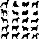 Famous dogs. Series of world-famous dogs Stock Photography