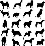 Famous dogs. Series of world-famous dogs Royalty Free Stock Images
