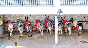 Famous donkey taxi Royalty Free Stock Photo