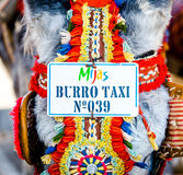 Famous donkey taxi Royalty Free Stock Photos