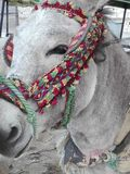 Famous donkey taxis of Mijas, Spain. Burro Taxi, typical mountain village Mijas, Andalusia, Spain, Europe, donkeys are adorned with very colorful gear and Stock Images