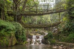 Famous Double Decker living roots bridge near Nongriat village, Cherrapunjee, Meghalaya, India. This bridge is formed by training tree roots over years to knit royalty free stock photos