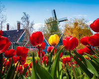 The famous Dutch windmills and authentic holland buildings. Stock Photos