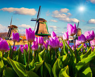 The famous Dutch windmills Stock Photo